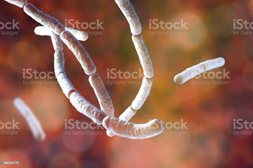 Bacillus subtilis, gram-positive bacteria, used as fungicides on plants stock photo