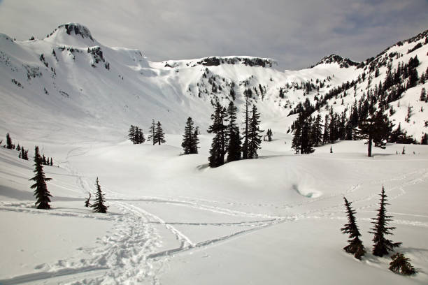 back country skiing and snow shoeing tracks and prints in the cascades by mt baker, washington, usa - snoqualmie foto e immagini stock