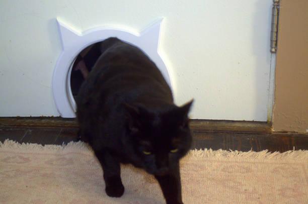 Zurück aus dem Katzenklo – Foto