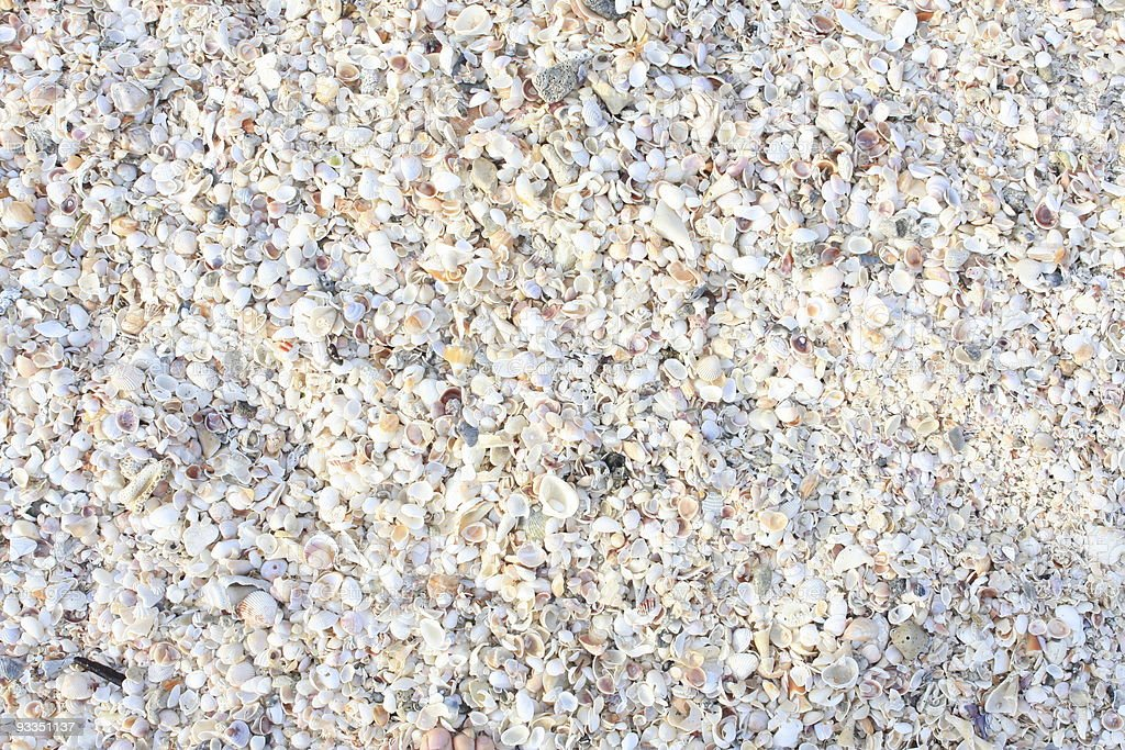 back ground of shells and shell gravel in florida stock photo