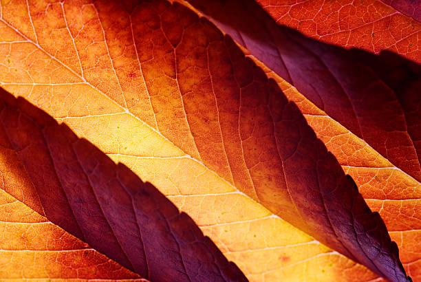 Dos éclairé feuilles d'automne - Photo