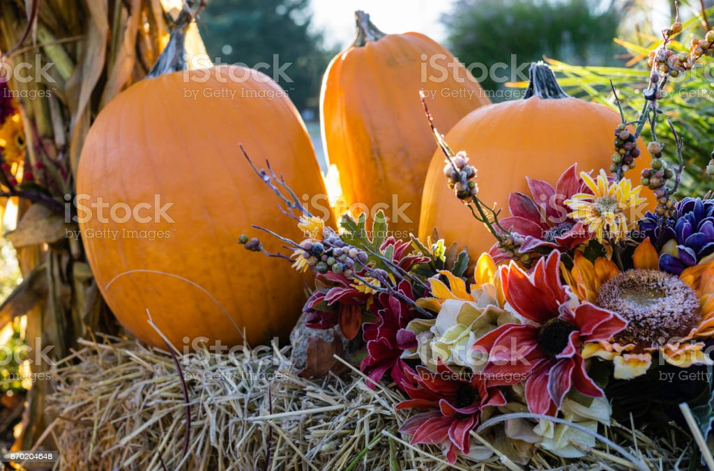 Back Lit Autumn Pumpkins in Morning stock photo
