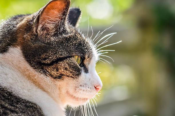Back lit cat profile picture id578806706?b=1&k=6&m=578806706&s=612x612&w=0&h=qzazxdsnf4c cbyrobxqul4sp0rwbne50hbfqxxulmk=