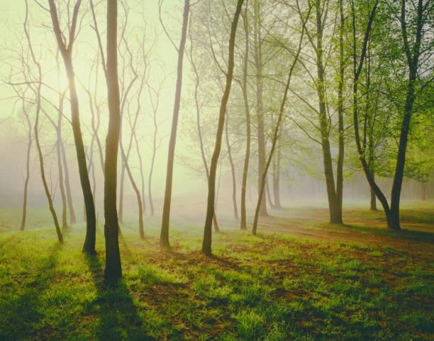 Wieder beleuchter Nebelwald Fairmont, West Virginia. – Foto