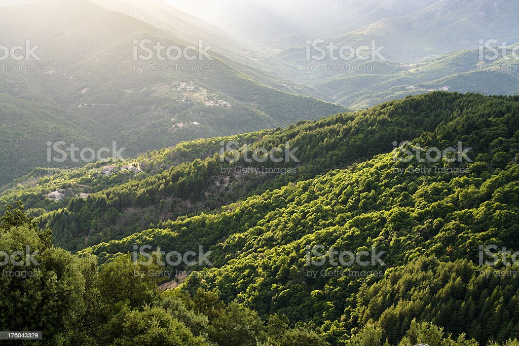 Back lit forested mountains stock photo