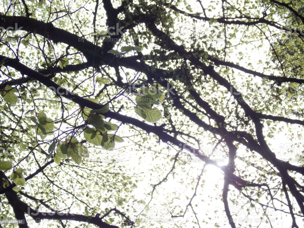 Back lit leaves photo libre de droits