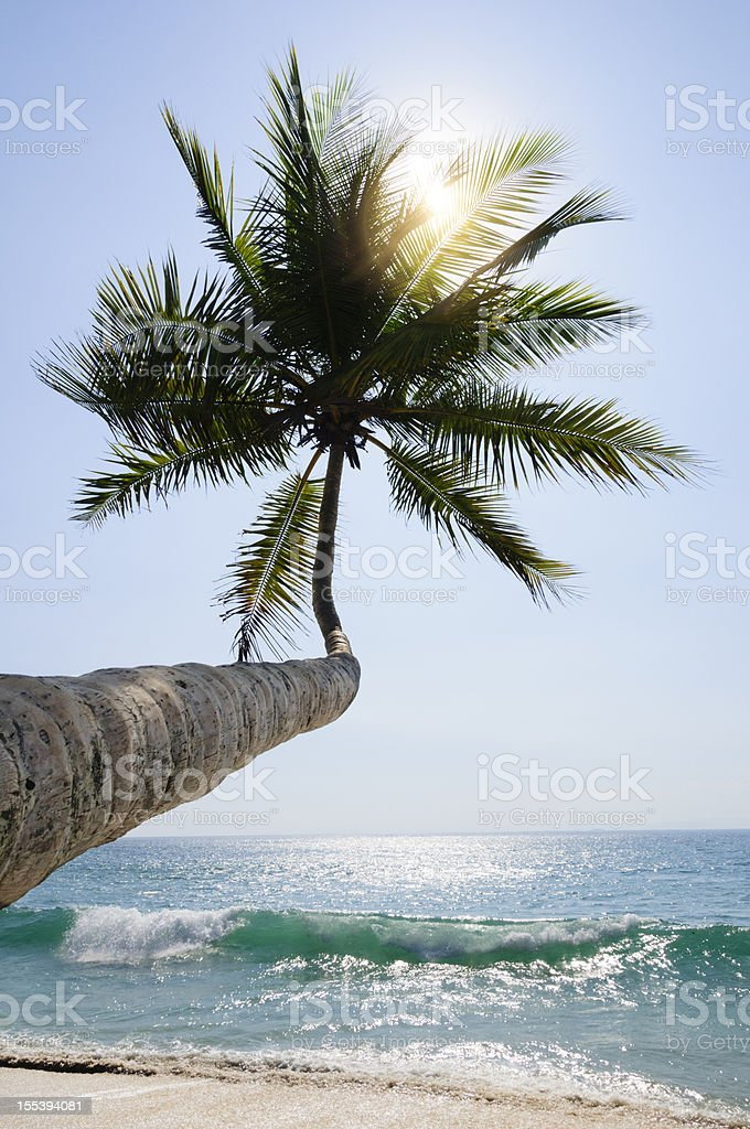 Back lit palm tree with sun flare royalty-free stock photo