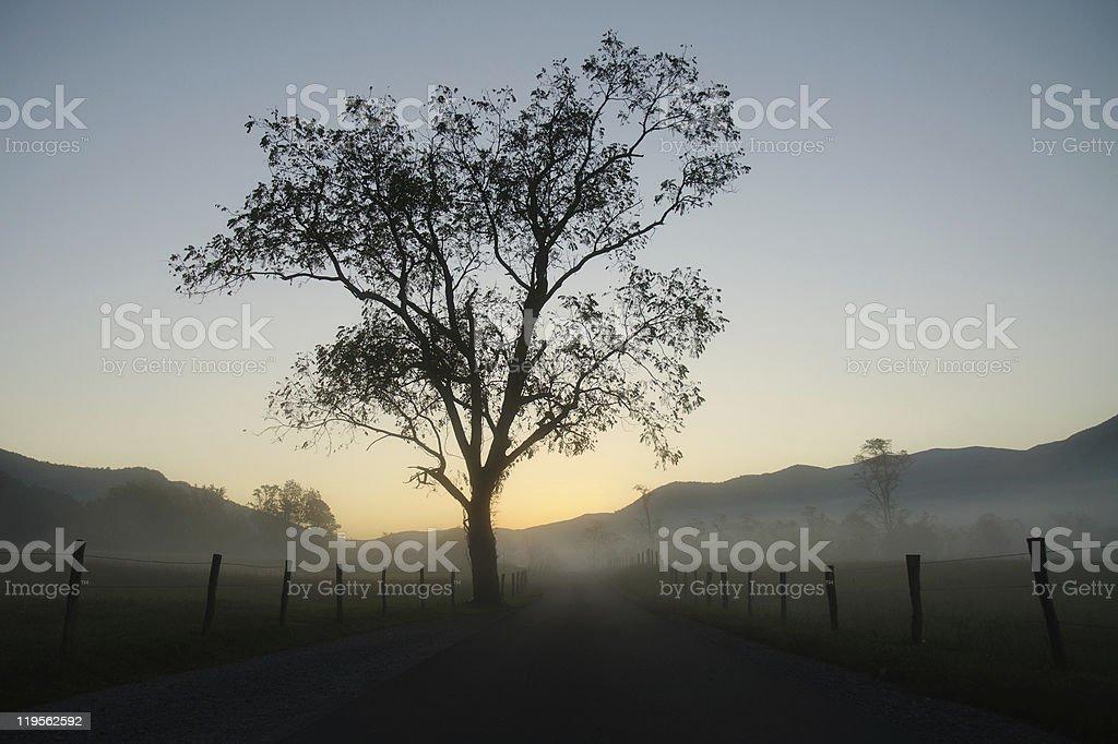 back lit tree at sunrise royalty-free stock photo