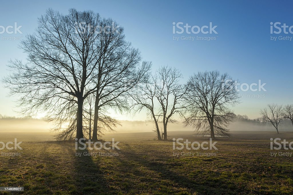 Back Lit Winter Trees With Fog royalty-free stock photo