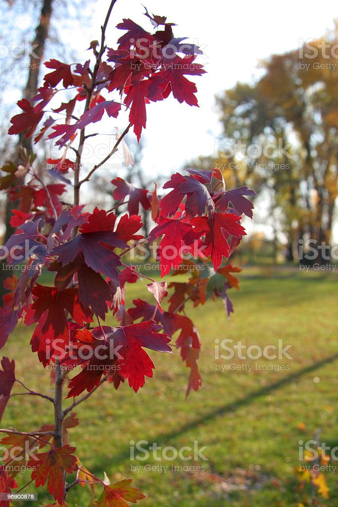 Back Lite Current in Fall royalty-free stock photo