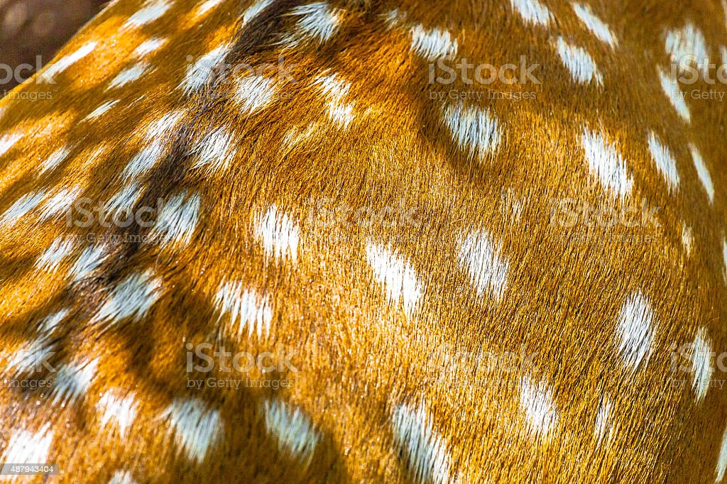Back of a Spotted Deer stock photo