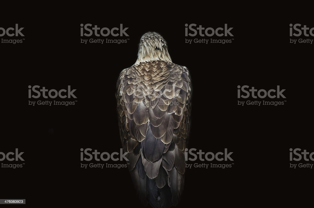 Back of an eagle royalty-free stock photo
