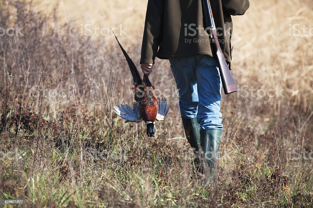 Back of going hunter with wildfowl stock photo