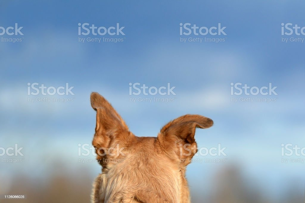 dog photo with lots of negative copy space for text