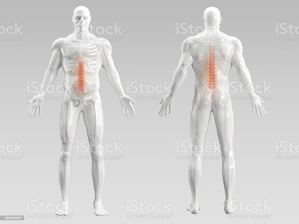 Back Pain Illustration royalty-free stock photo