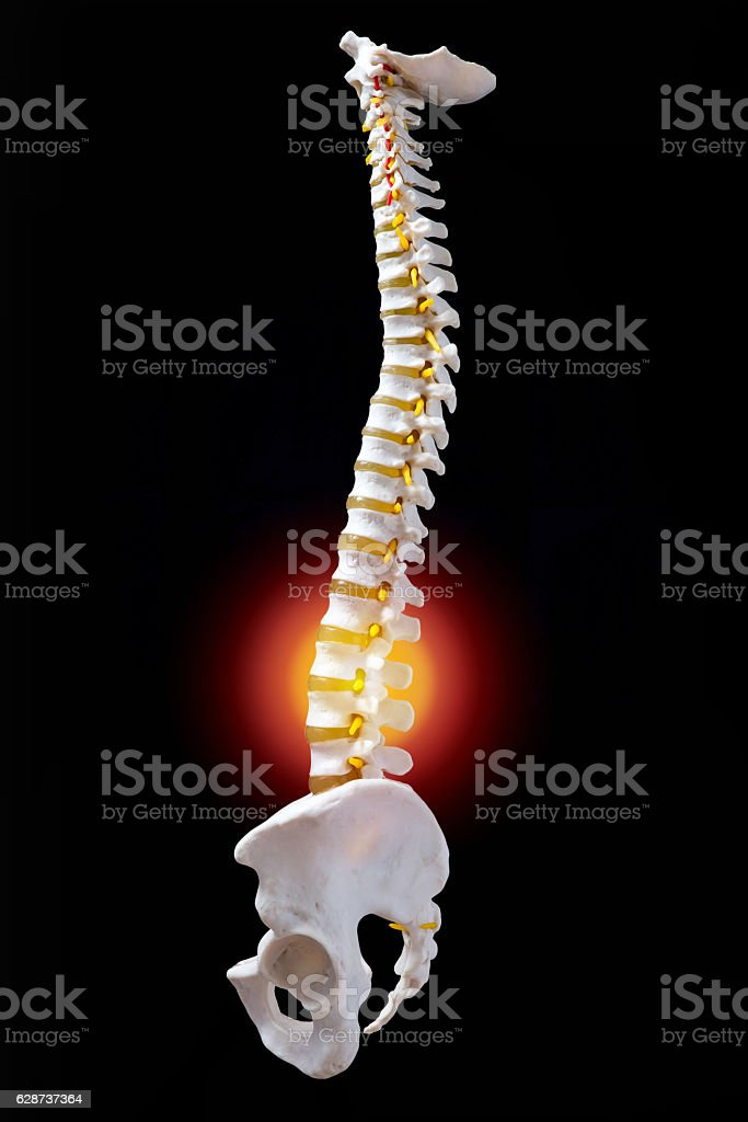 Back Pain Loin Showed On Plastic Model Of Human Spine Stock Photo