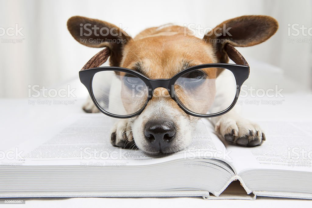 Back to school books stock photo