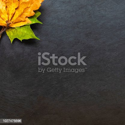 istock Back to school concept. Black chalkboard with pieces of chalks and autumn yelllow leaves isolated on white background. Flat lay