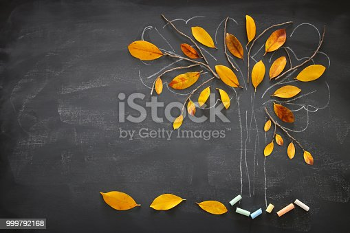 istock Back to school concept. Top view banner of tree sketch with autumn dry leaves over classroom blackboard background. 999792168