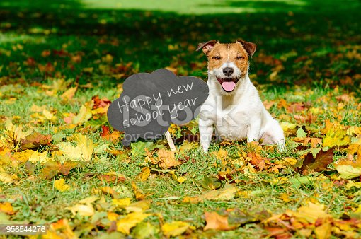 istock Back to school concept with happy dog and greeting on blackboard 956544276