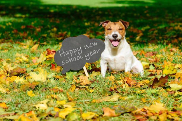 Zurück zum Schulkonzept mit glücklicher Hund und Gruß an Tafel – Foto