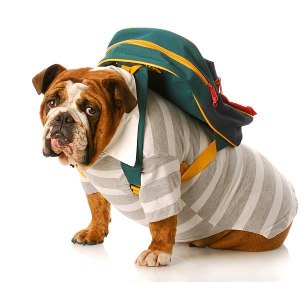 Back to school picture id151533920?b=1&k=6&m=151533920&s=612x612&w=0&h=2iinj np5n8hftdmnlufbsi irmrptkwodnvdza8qbs=
