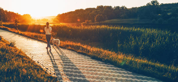 Back view of a caucasian girl running in the park with her dog against the sunshine stock photo