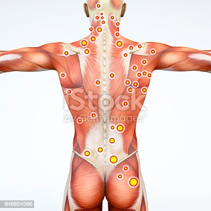 Back view of a man and his trigger points. Anatomy muscles. 3d rendering Myofascial trigger points, are described as hyperirritable spots in the fascia surrounding skeletal muscle. Palpable nodules in taut bands of muscle fibers