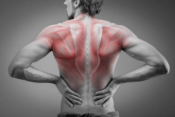 back view of athlete man torso with muscle structure - masaje deportivo fotografías e imágenes de stock
