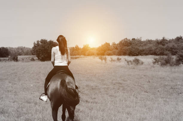 rückansicht des frau pferd zu befreien, im sonnenuntergang - pferdezeitschrift stock-fotos und bilder