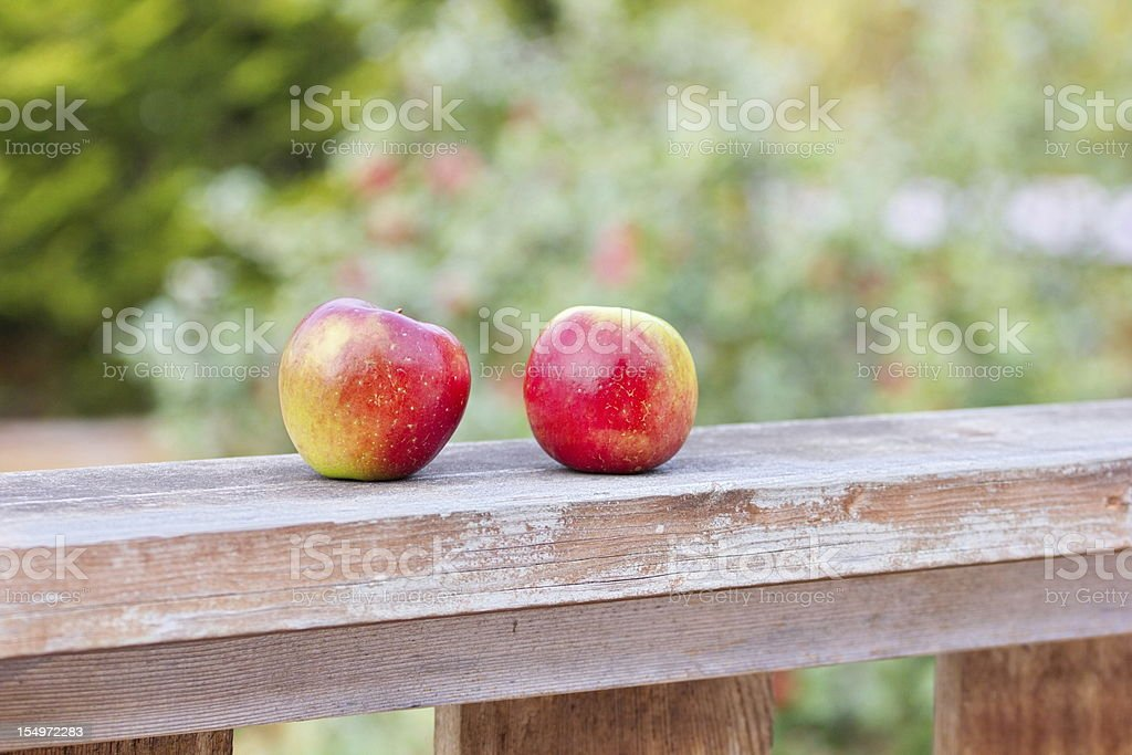 Back Yard Grown Apples stock photo
