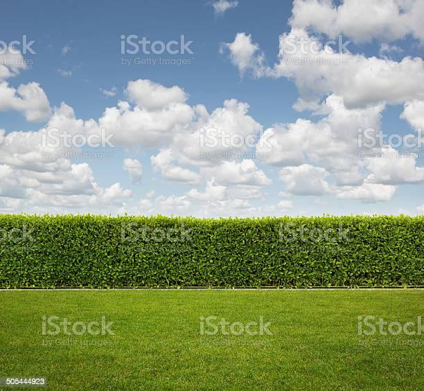 Photo of Back yard