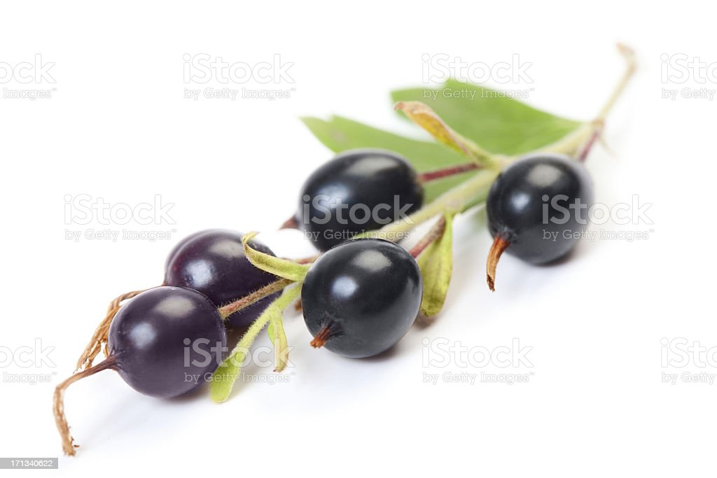 Backberry with green leaf stock photo
