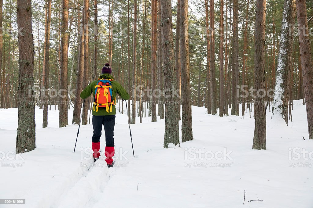 backcountry skier in snowy forest stock photo