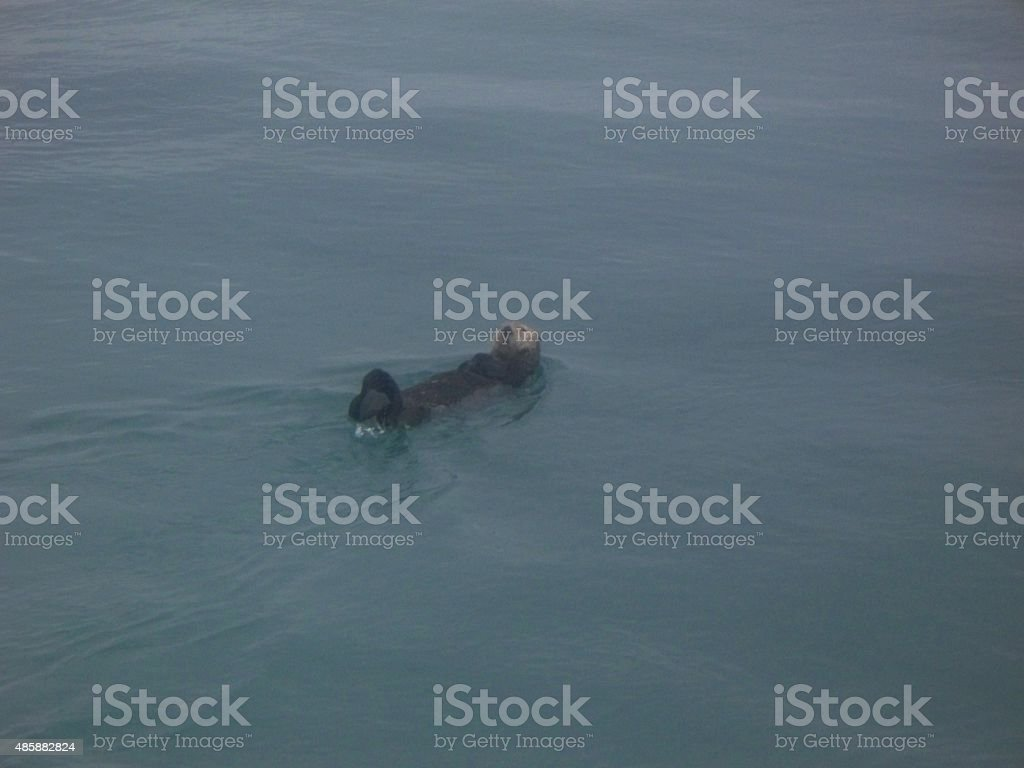 Back-floating Seal stock photo