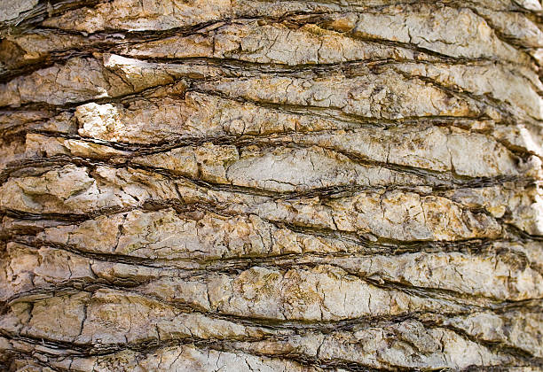 Backgraund tronco de uma árvore de palma - foto de acervo