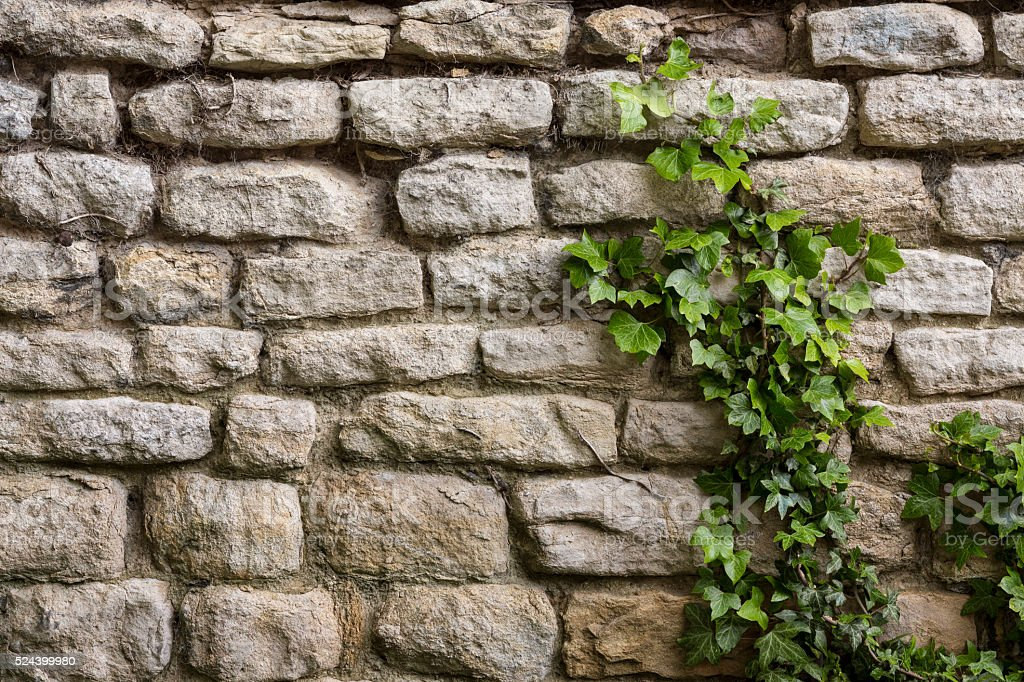 Background - Ancient Stone Wall - Ivy stock photo