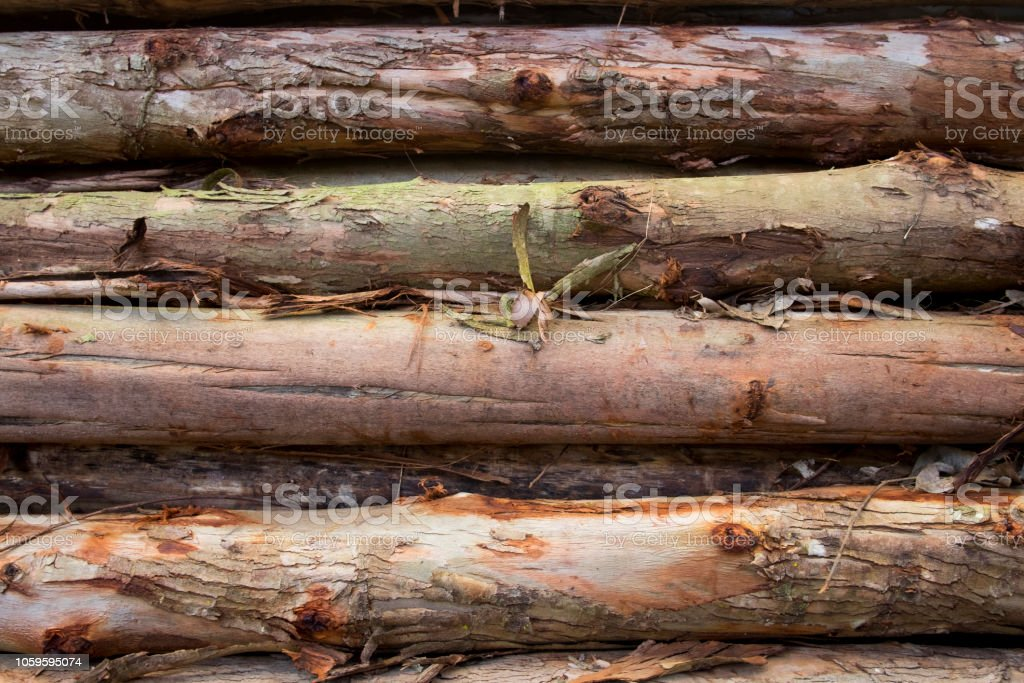 Background and texture of timber. Pile of many brown timber.