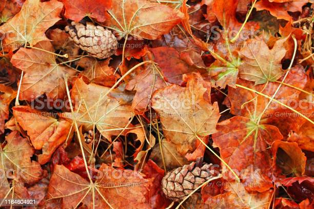 Photo of background: autumn, fallen leaves