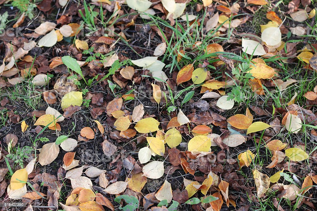 background autumn leaves on the ground stock photo
