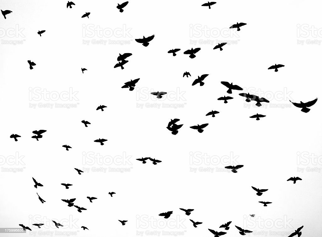 Background: Birds In Flight royalty-free stock photo