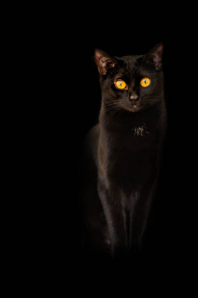Background black cat yellow flame eyes on black background picture id959924554?b=1&k=6&m=959924554&s=612x612&w=0&h=dp7axeeekorb9thcipzqy64g8fyl8i22s9r0z1g4cpc=
