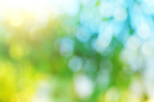 background blur of nature in spring. - soft focus stock photos and pictures