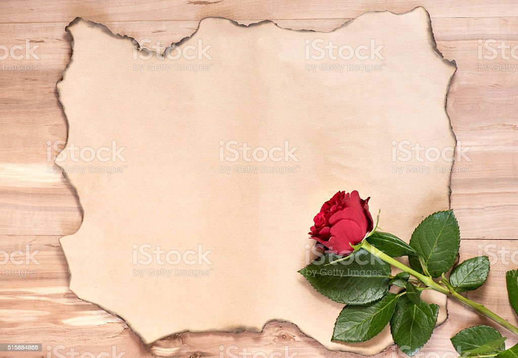 Background burnt paper and singl rose stock photo