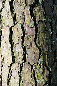 Background close up of tree bark