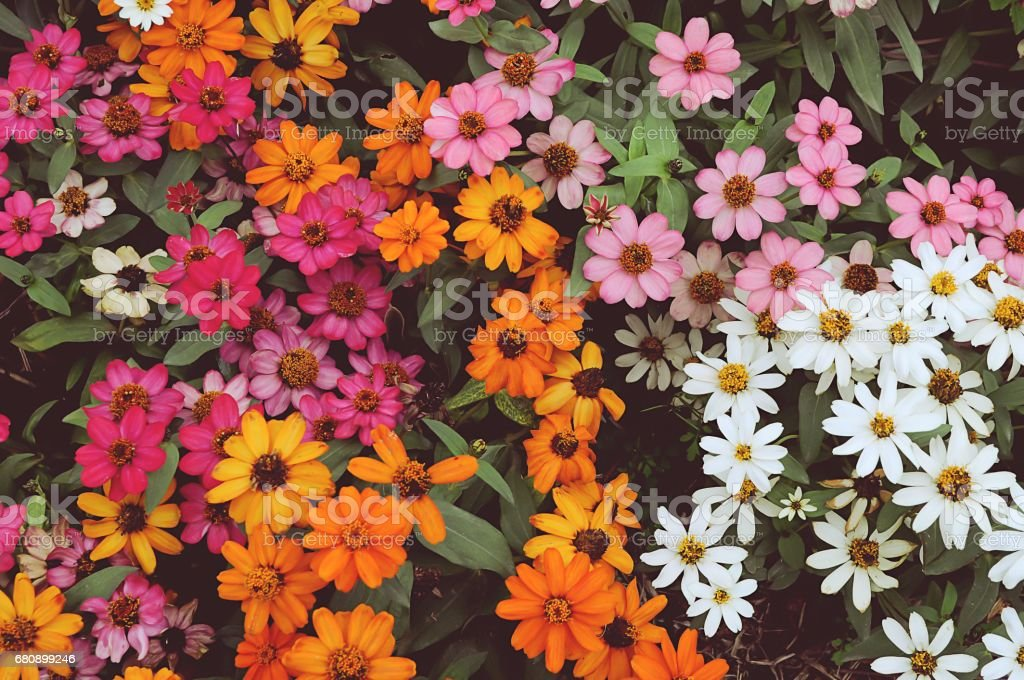 Background colorful flower royalty-free stock photo