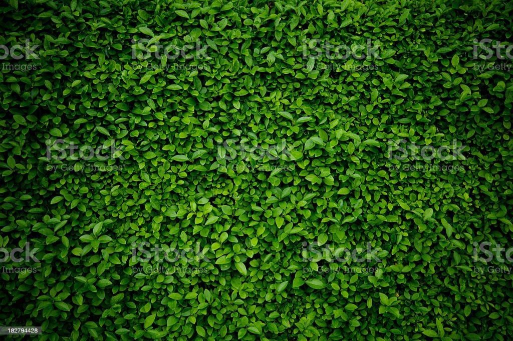 Background comprised of small green leaves stock photo