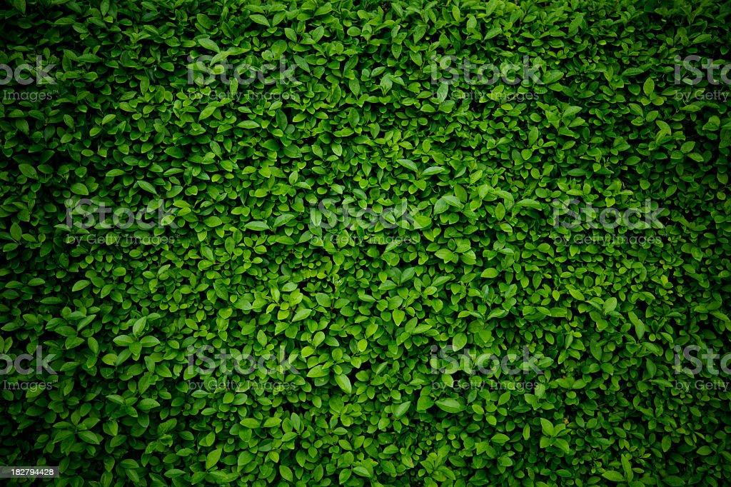 Green Hintergrund – Foto