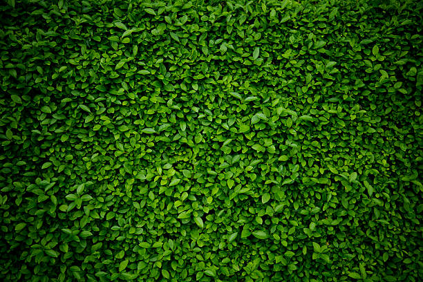 background comprised of small green leaves - yeşil renk stok fotoğraflar ve resimler
