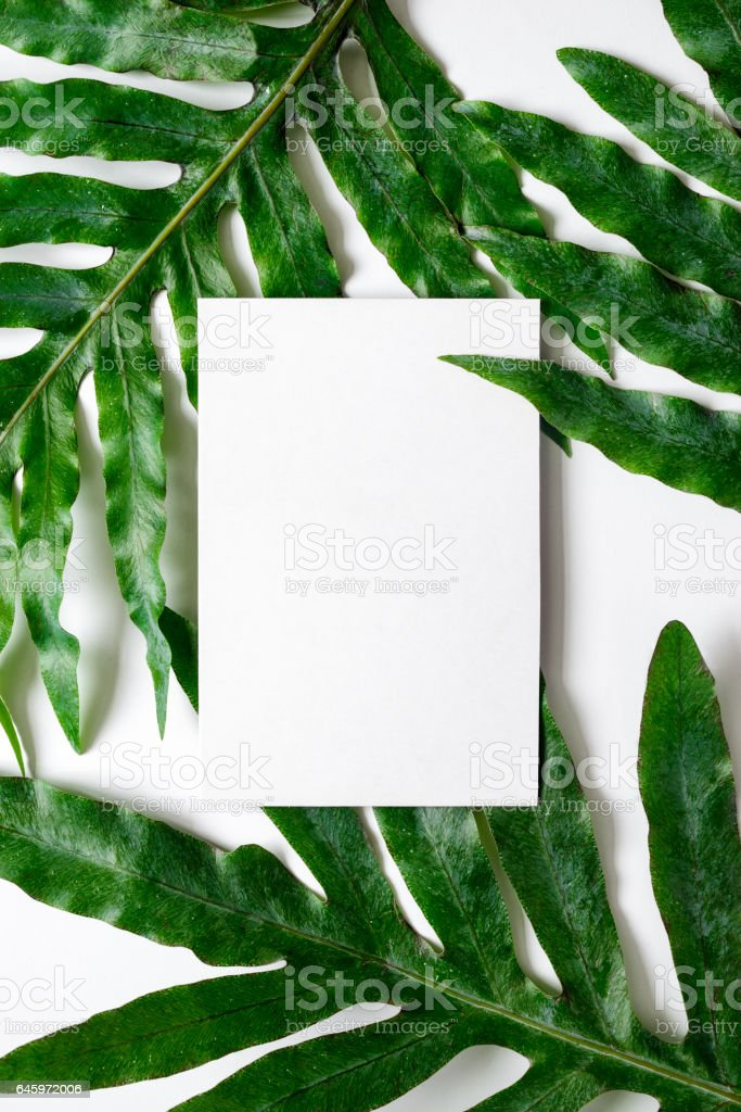 Background decorated with tropical plant leaves stock photo